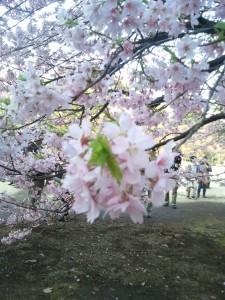 春の始まり。。。