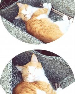 西池袋公園 猫の新顔