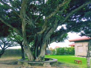 自然の癒やしIn沖縄